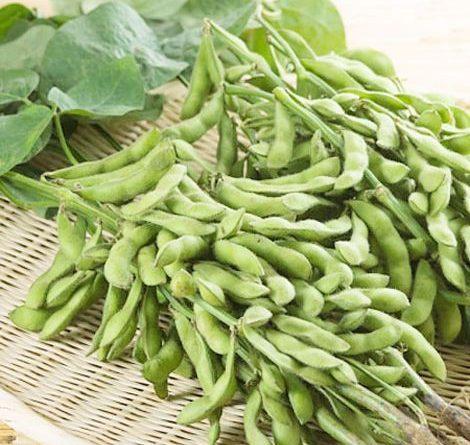 Kỹ thuật trồng đậu tương