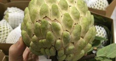 chuyên sản xuất xốp bao trái cây giá rẻ tại đắk lắk